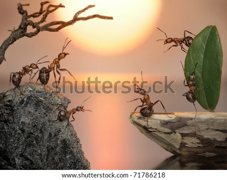 crew of ants sailing back home, fantasy
