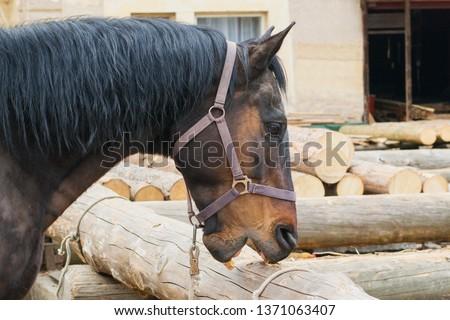 Crib biting horse - animal behavioral problem #1371063407