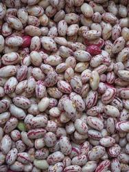 crimson beans, variety of common bean (scientific name Phaseolus vulgaris) legumes vegetarian food
