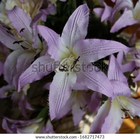Crinum Artificial Flower Close up Stok fotoğraf ©