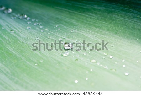 stock-photo-crisp-water-droplets-on-a-lush-green-agave-leaf-48866446.jpg