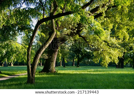 crisply evening sun and powerful luscious green trees in the park