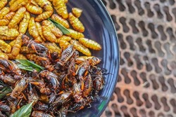 Crispy insects are served in black ceramic plates placed on tables made of steel grates, and fried insects are a popular food paired with alcoholic beverages as they are easy to find and very popular