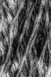 Criss Crossing Tree Bark Texture Abstract Nature Image