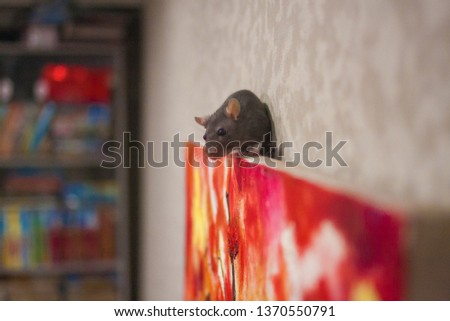 Criticism of modern art concept. rat gray climbs the picture. symbol of 2020. mouse chinese calendar.