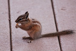 Critters Munching on a Treat