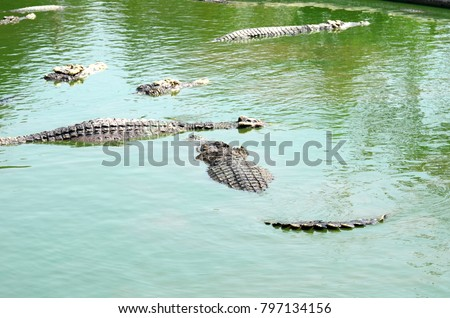 Crocodile (alligator-like reptile) on dark water surface. stock photo