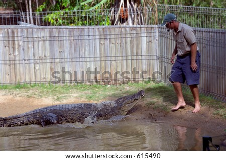 Crocodile Attack Singapore Picture on Crocodile Attack Demonstration Stock Photo 615490   Shutterstock