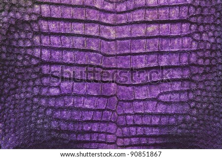 Crocodile belly skin texture background.