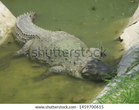 Crocodile Best Pic , Wild Animal