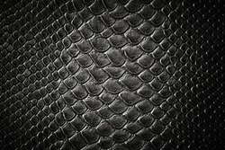 Crocodile black skin leather texture