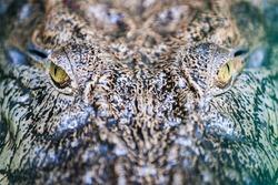 crocodile, croc