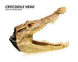 Crocodile head isolated on white background. Taxidermy or stuffed animal. ( Clipping path )