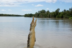 Crocodile jumping out of water in Adelaide River, Kakadu, Australia