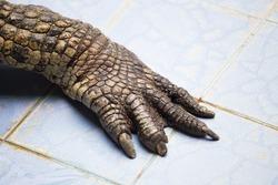 Crocodile legs