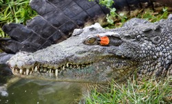 Crocodile look scary but beautiful.