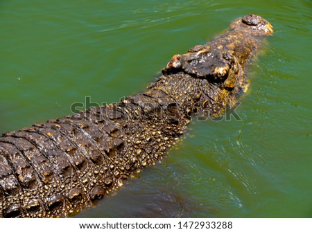 Crocodile or alligator close-up portrait. Wildlide and animal photos. Predators and reptiles #1472933288