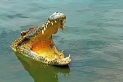 crocodile,Sharp teeth,Amphibians