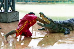 crocodile show in thailand. very exciting