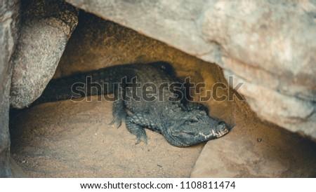 Crocodile sleeping on a rock #1108811474