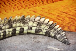 Crocodile tail close up
