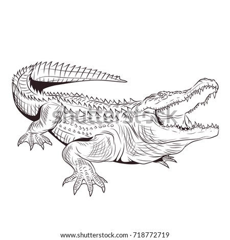 crocodile with open mouth adult ...