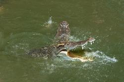 Crocodiles in the zoo present Wildlife lifestyle