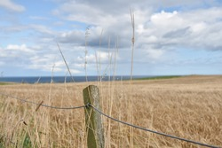 Crop Field on a muggy weather's Day near Dunnottar Castle in beautiful Scotland
