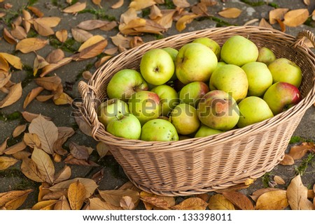 Crop of green and yellow apples in basket, Germany