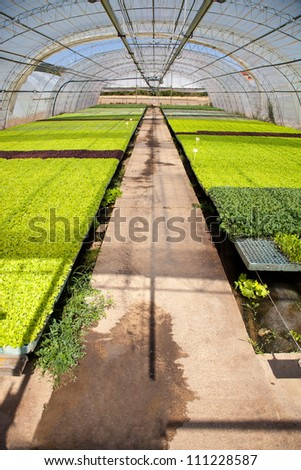 Crop of seeds and vegetables in a greenhouse
