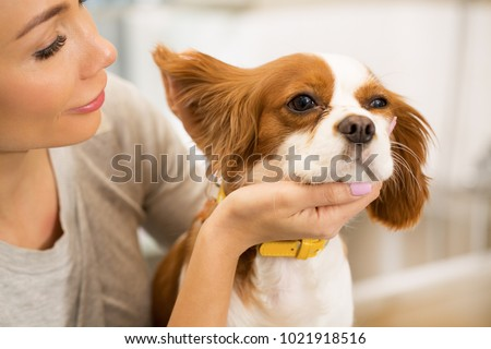 Cropped close up of a young woman checking ears of her cute little spaniel puppy copyspace medicine health pet care people love caring owner canine dogs family pedigree concept.