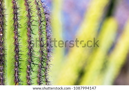 Cropped closeup photo of a Saguaro cactus in the Arizona Sonoran Desert with copy space in blurred background