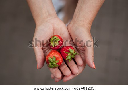 Cropped image a woman's hands holding a bunch of strawberries. Female holding a handful of fresh strawberries.  handful of fresh, ripe strawberries. Woman Holding Strawberries #662481283