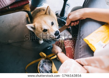 Photo of Cropped image of female pet owner feeding lovely fluffy akita inu japanese dog on break in cafeteria, well trained puppy eating his food sitting under table in restaurant during free time with women