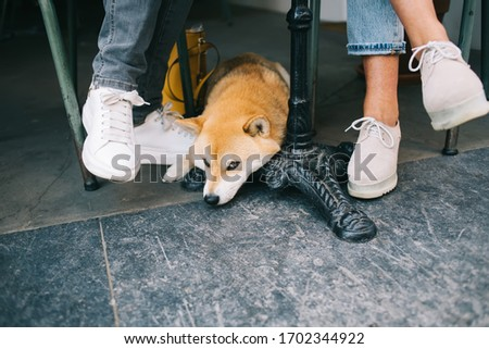 Photo of Cropped image of female sitting in cafe outdoors on break with akita inu japanese dog, beautiful young puppy looking at camera lying under table in pet friendly cafeteria enjoying free time