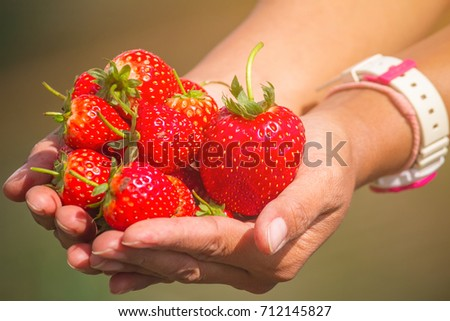 Cropped image of woman's hands holding a bunch of strawberries. Female holding a handful of fresh strawberries after harvest from garden. #712145827