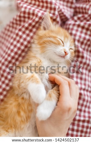 Cropped vertical portrait of little cute ginger kitty enjoys stroking. Caucasian girl's hand stroked the little red and white fluffy kitten. Cat fell asleep from affection. Domestic animals concept. #1424502137