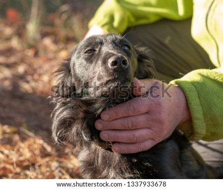 cropped view of man stroking black mongrel dog in sunny forest #1337933678