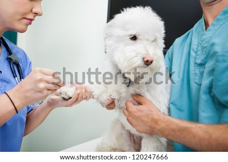 Cropped view of young veterinarian doctors taking blood work from dog