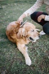 Cropped woman grooming her dog in yard. High angle view of female hand brushing retriever dog with comb outdoor.