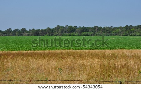 Crops growing on sunny day