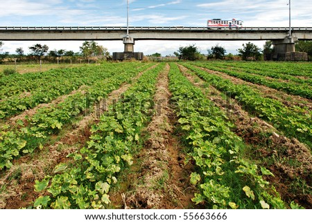 Crops on a Field Overlooking a Bridge - stock photo