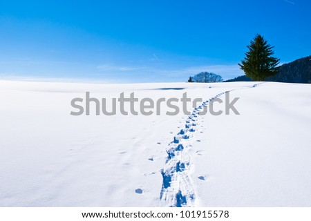 Cross country ski track in rural landscape