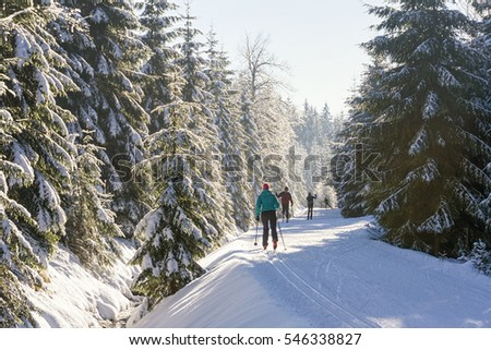 Cross-country skiers running a groomed ski trail. Road in mountains at winter in sunny day. Trees covered with hoarfrost illuminated by the sun. Jizera Mountains, Czech Republic.   #546338827