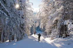 Cross country skiing in the forest, Sumava, Czech republic