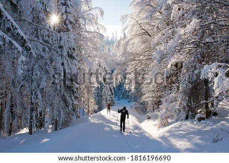 Photo of  Cross country skiing in the forest, Sumava, Czech republic