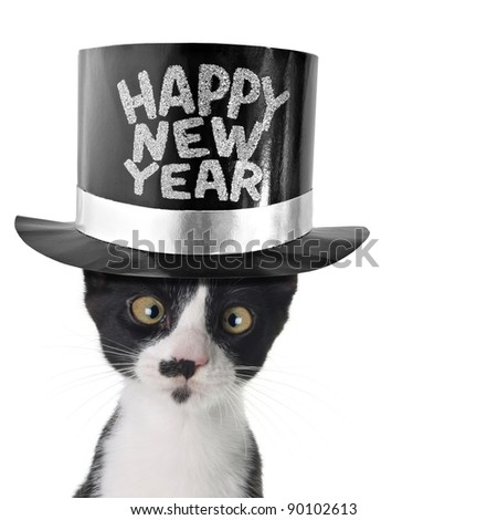 Cross eyed cat wearing a happy new year hat.