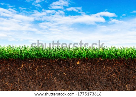 Cross section brown soil and green grass in underground with blue sky in background. ストックフォト ©