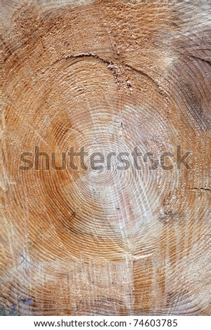 Cross section of a tree - stock photo