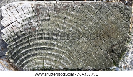 Cross section of an old tree log #764357791